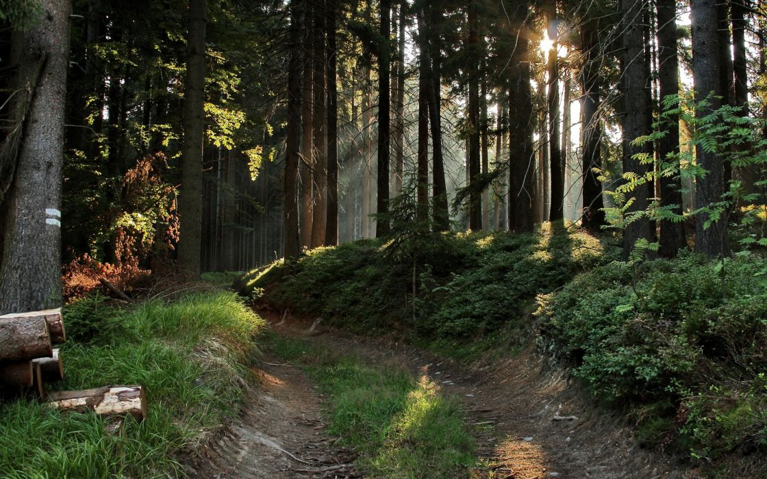 nature landscapes trees forest sunlight sunbeams wallpaper