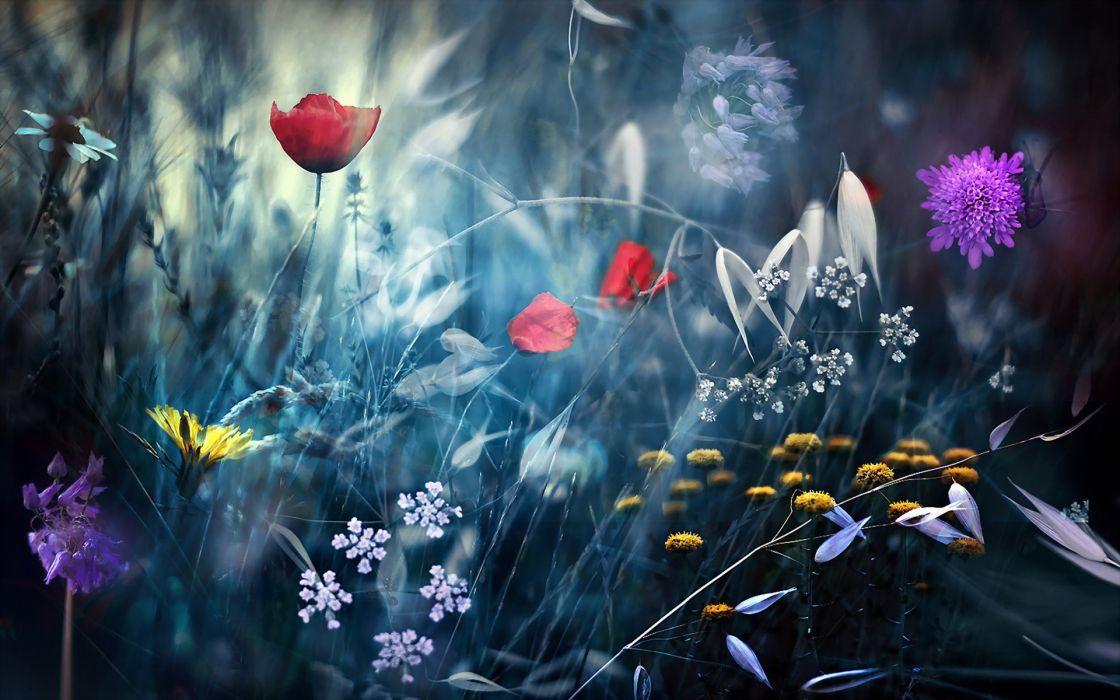 flowers nature manipulation wallpaper