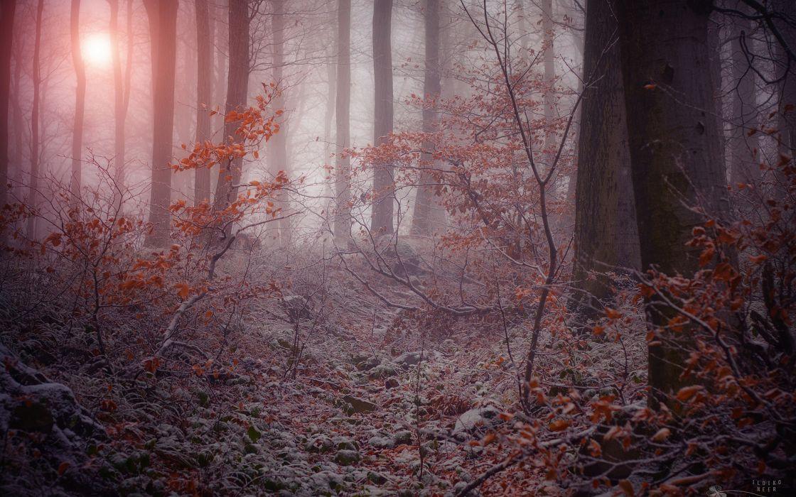 nature landscapes trees forest autumn fall seasons morning frost fog mist sunlight dew wallpaper