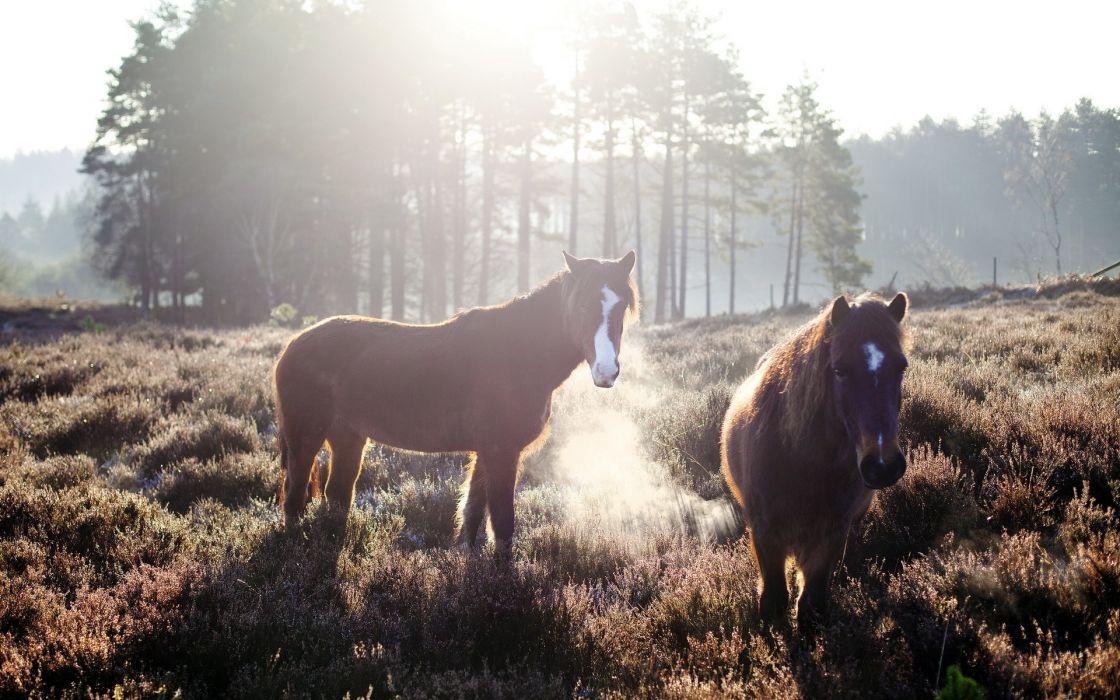 animal horses landscapes sunlight wallpaper