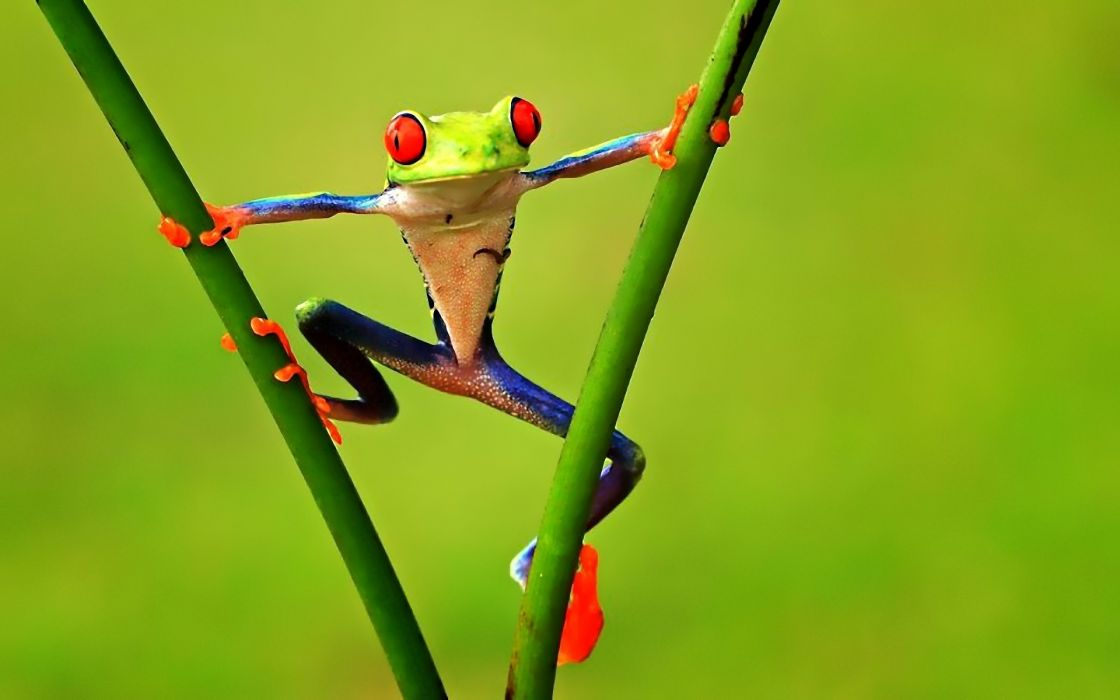 animals frogs green contrast colors nature wallpaper
