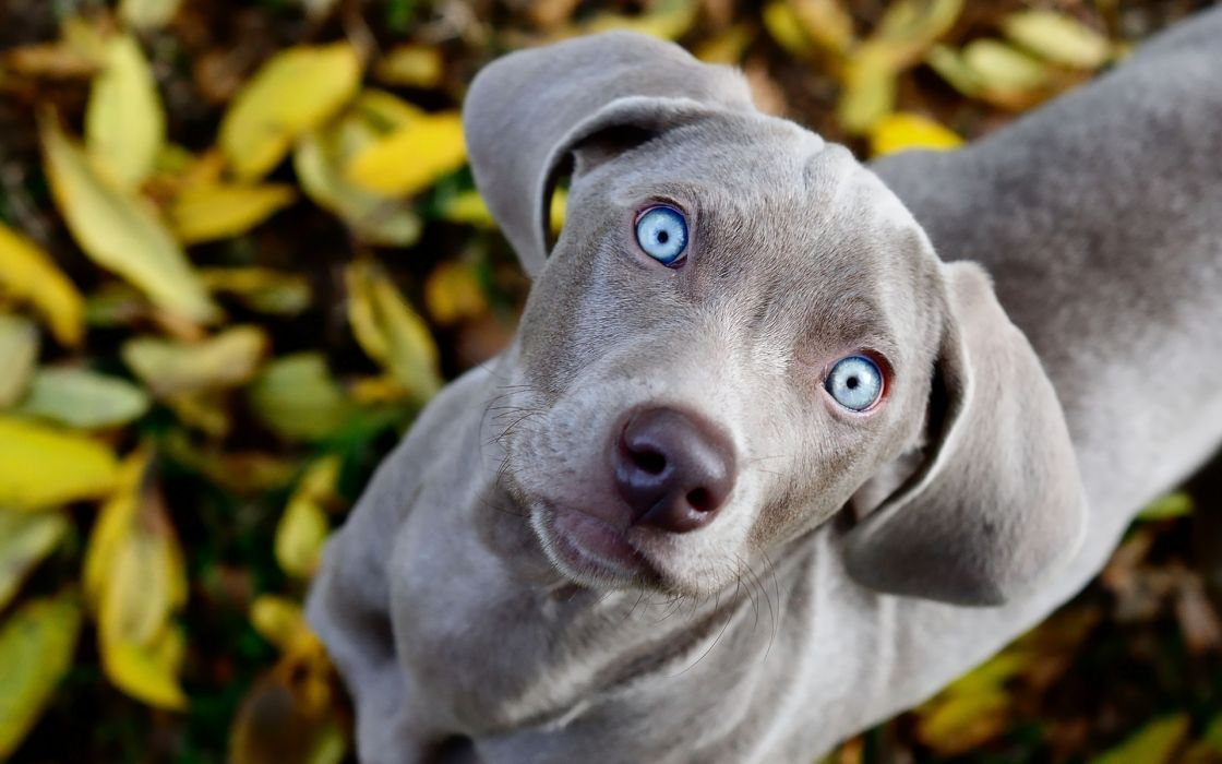 animals dogs eyes contrast wallpaper