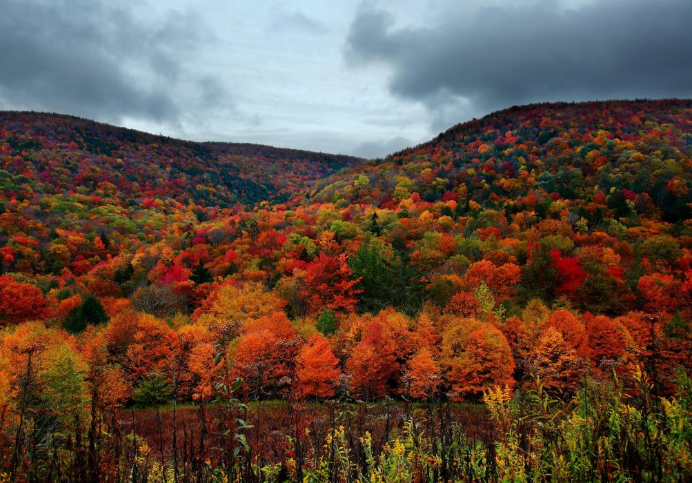 nature landscapes trees forest autumn fall seasons hills colors wallpaper