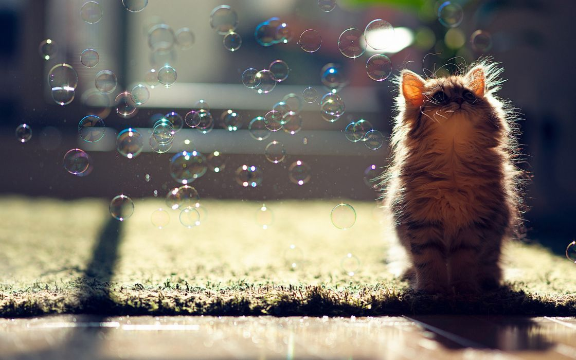 animals cats bubbles kittens cute wallpaper