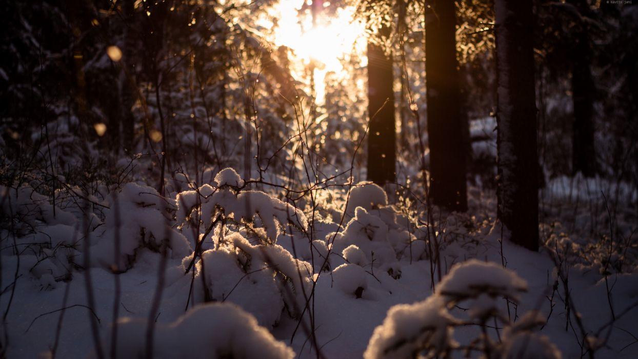 landscapes nature winter snow surise sunset sunlight sun trees forest seasons wallpaper