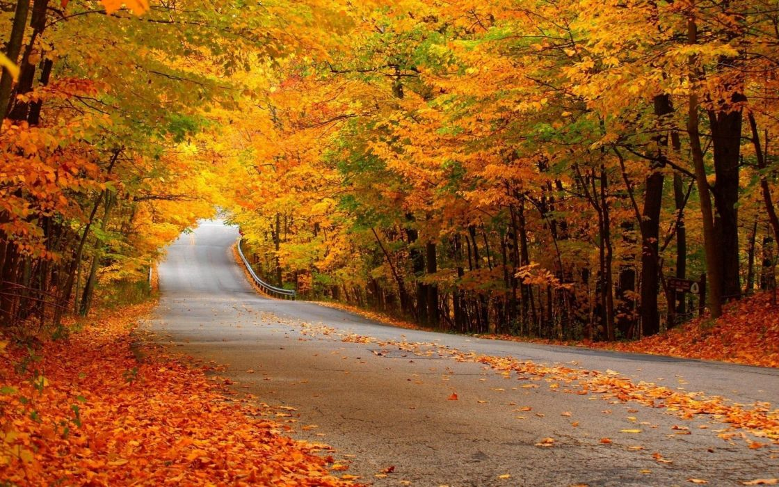 landscapes nature trees forest leaves autumn fall seasons roads colors wallpaper