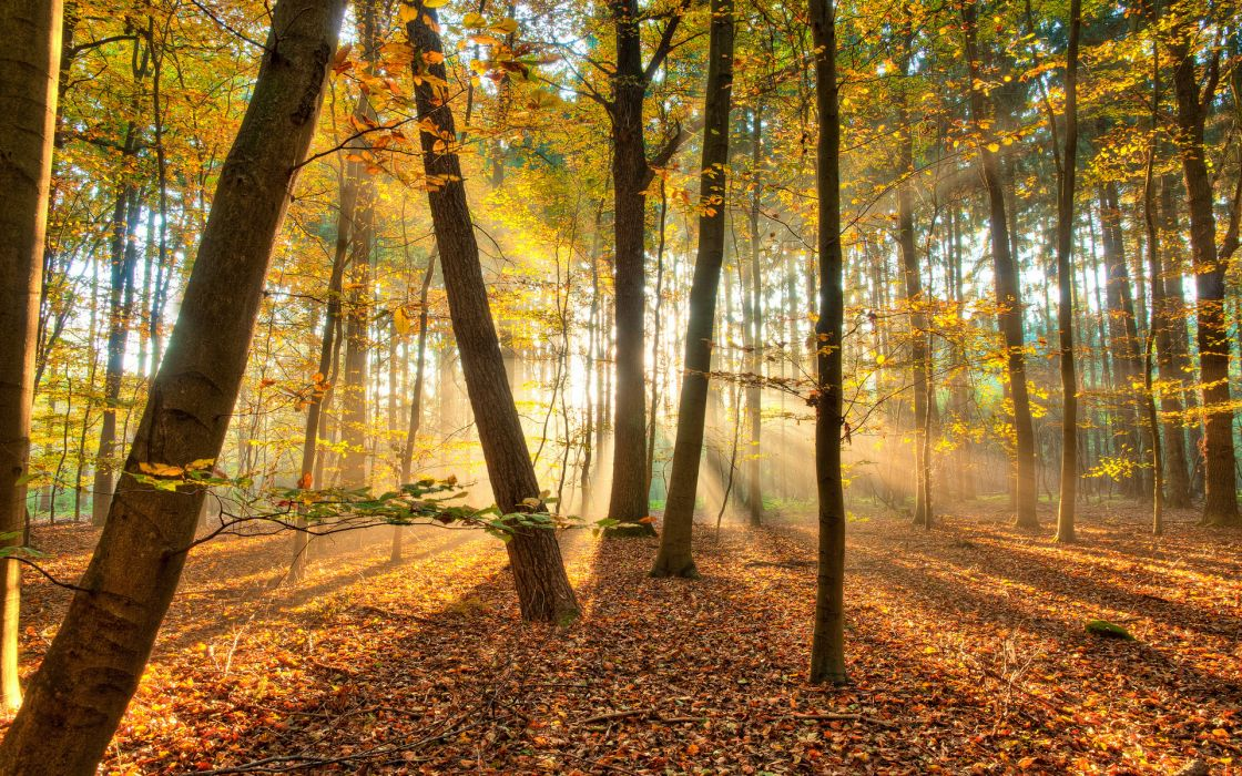 landscapes nature trees forest autumn fall seasons leaves sunlight sunbeams wallpaper