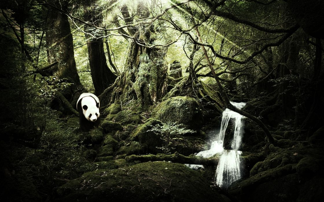 landscapes nature trees forest rivers jungle bear panda manipulation wallpaper