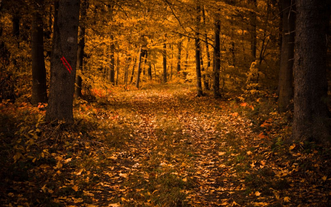 landscapes nature trees forest autumn fall seasons leaves wallpaper
