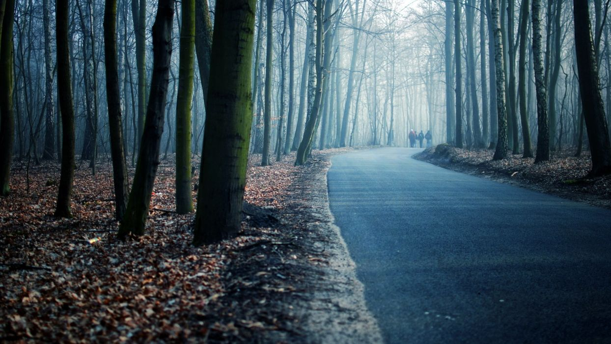 landscapes nature roads people trees forest autumn fall seasons mood leaves wallpaper