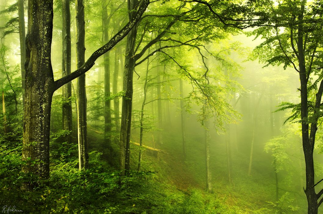 Landscapes Nature Trees Forest Haze Foh Mist Humid Jungle