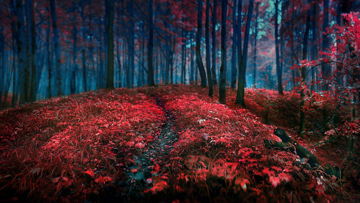 landscapes nature trees forest autumn fall seasons red contrast leaves wallpaper