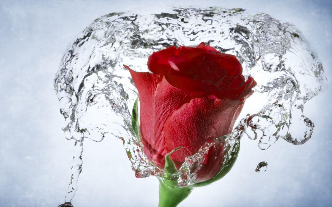 nature flowers timelapse stopgap water drops wallpaper