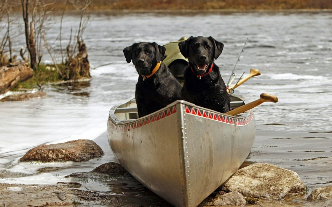 animals dogs boats lakes rivers nature wallpaper