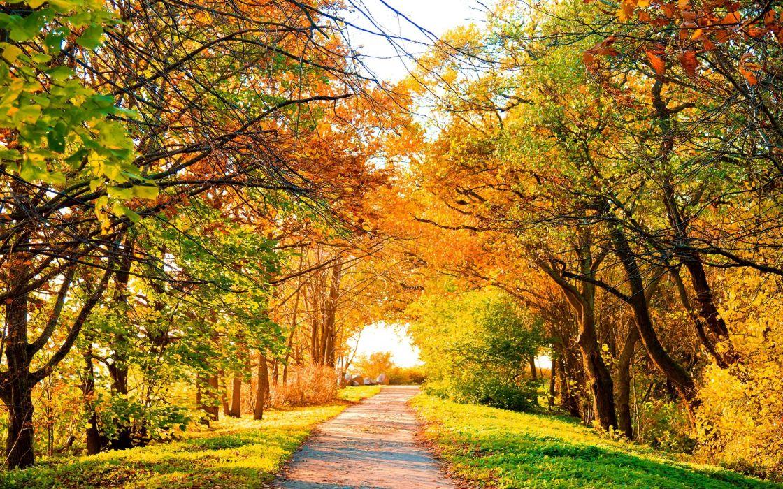 landscapes roads sunlight autumn fall colors seasons wallpaper