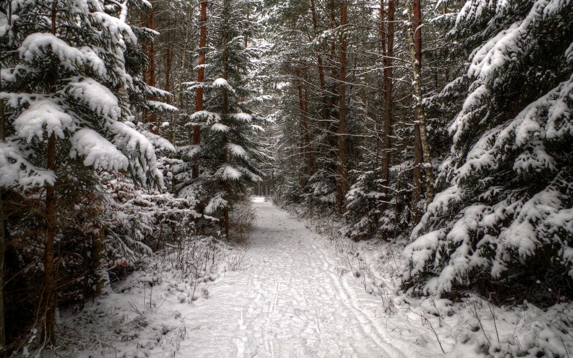 landscapes winter snow trees forest roads white wallpaper