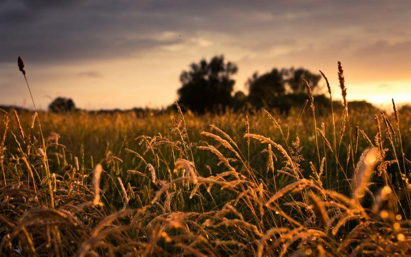 landscapes whet grass sunrise sunset trees skies clouds sunlight wallpaper