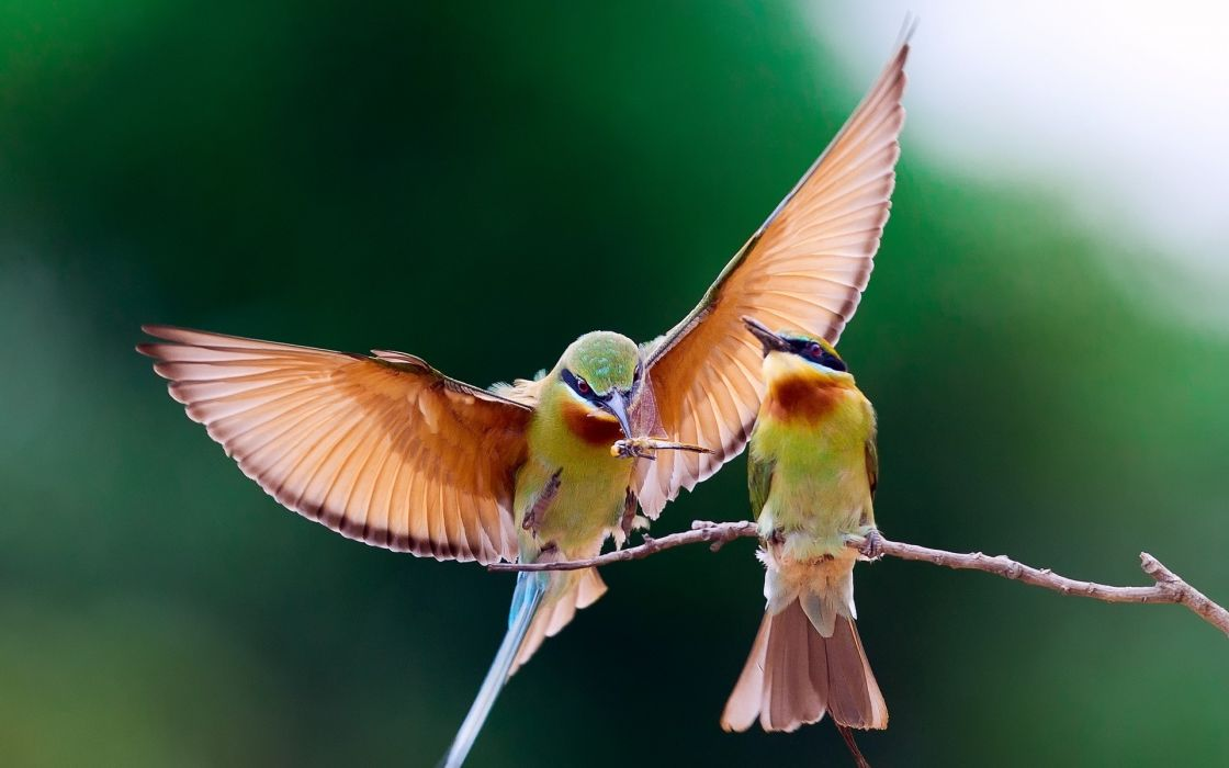 colors fly flying flight wings feathers wallpaper