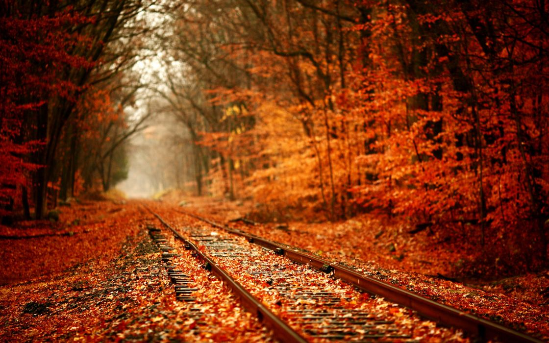 tracks train railroad autumn fall seasons leaves colors trees forest wallpaper