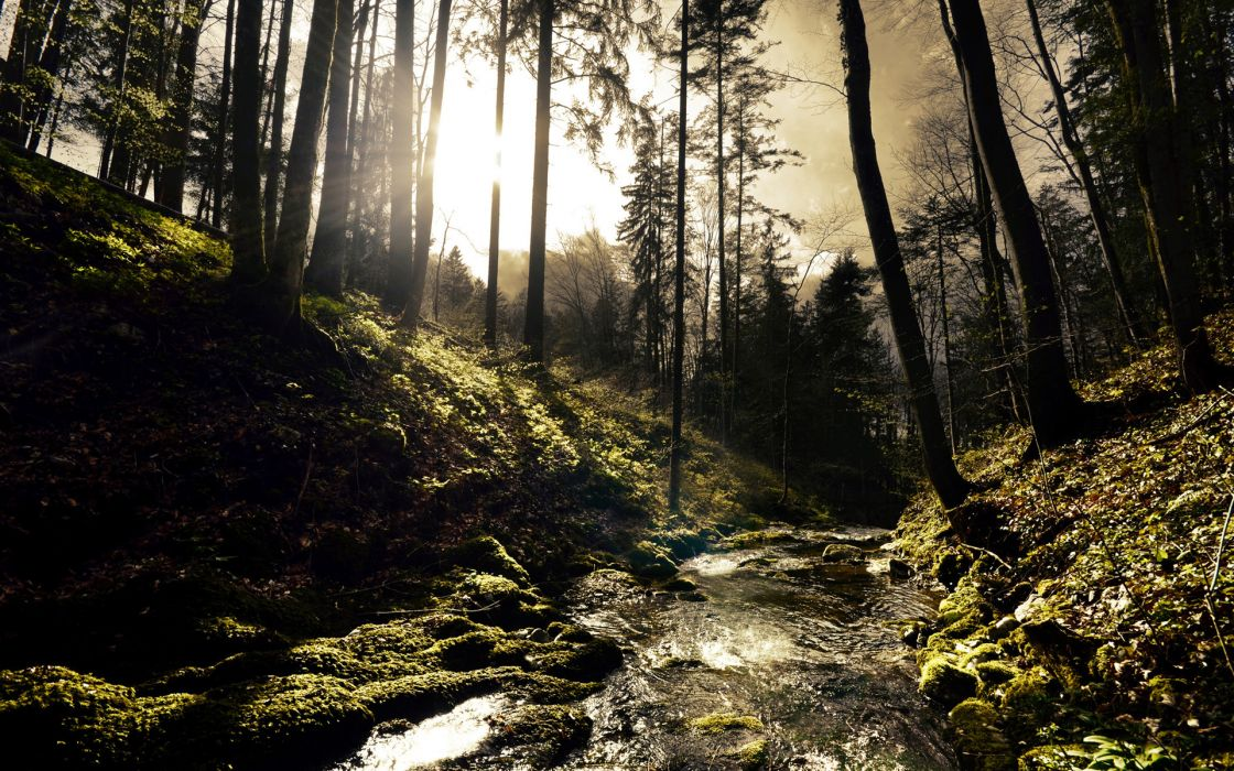 landscapes forest fog mist rivers sunlight sunrise wallpaper