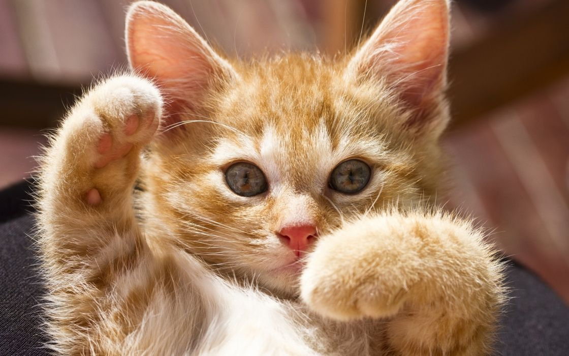 kittens cute humor funny paws wallpaper