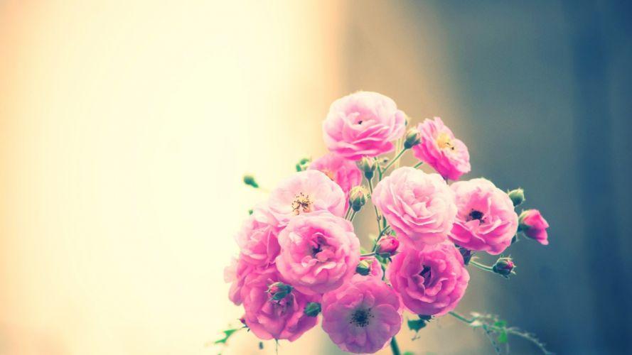 nature flowers soft still life still-life pink photography wallpaper