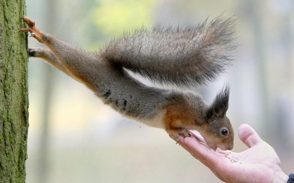 squirrels rodents hands people humor funny feet paws wallpaper