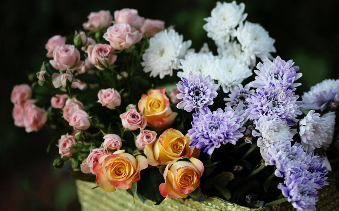 nature flowers still life still-life petals colors wallpaper