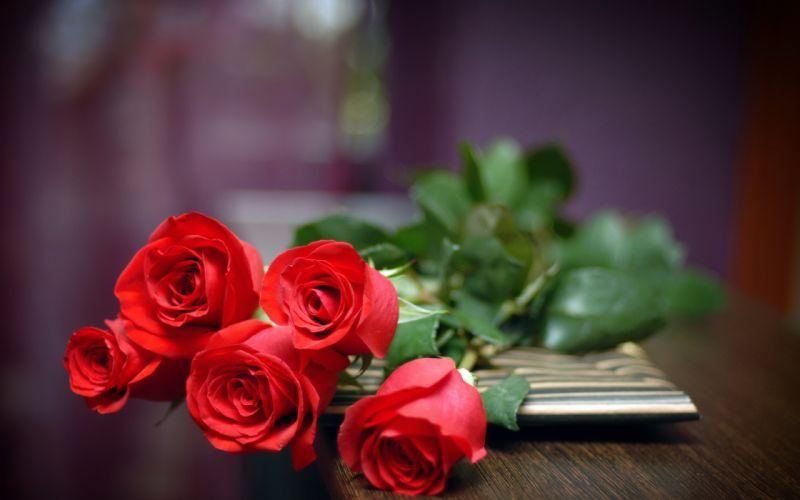 nature flowers red petals stems roses still life still-life close close-up macro valentine holidays wallpaper