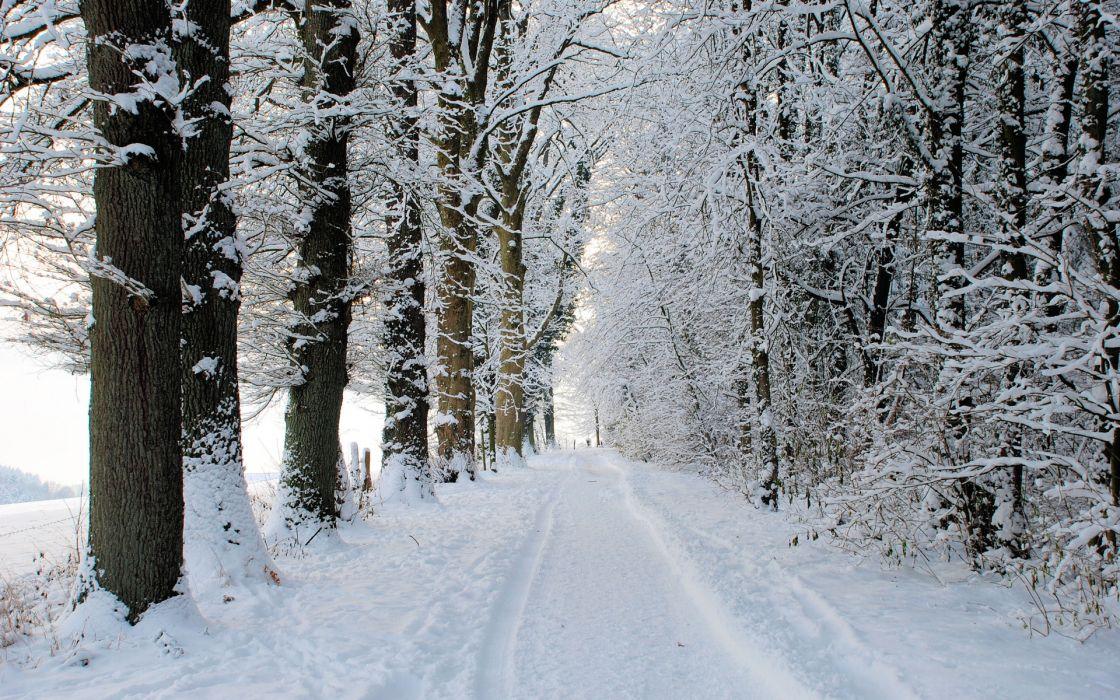 landscapes nature trees roads winter snow seasons wallpaper