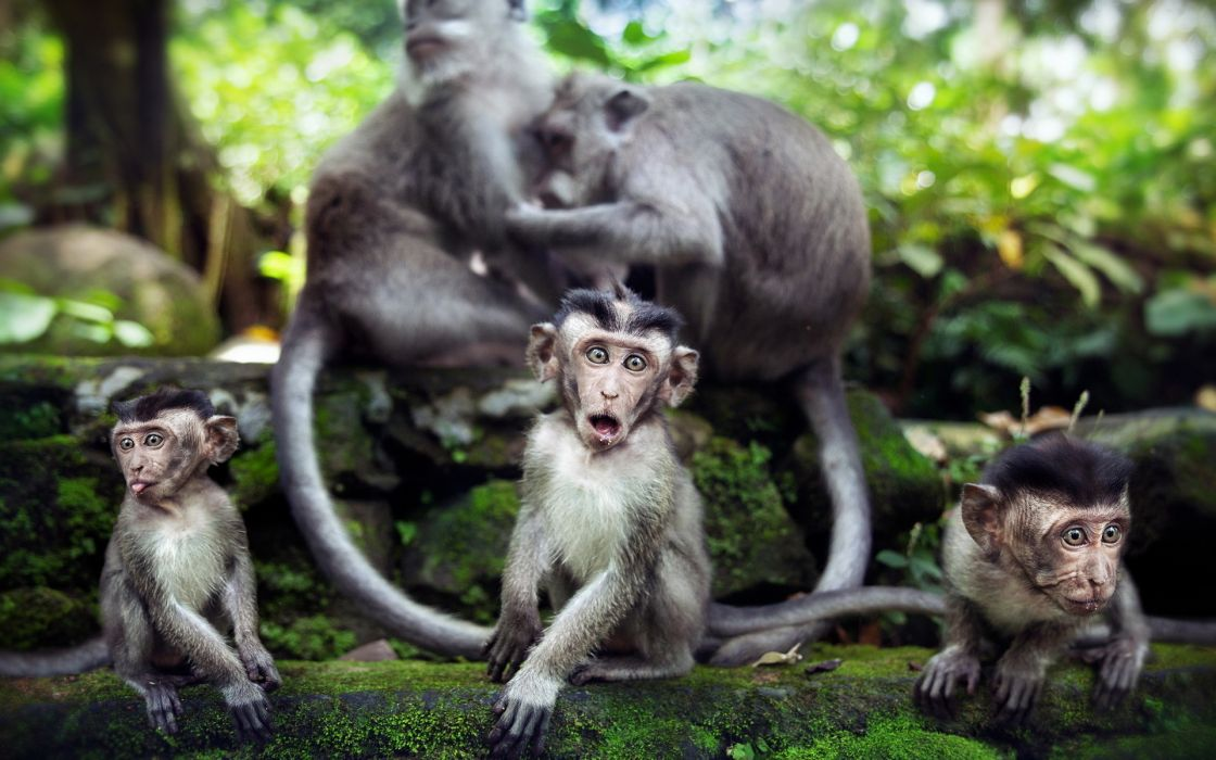 animals babies monkeys primates wallpaper