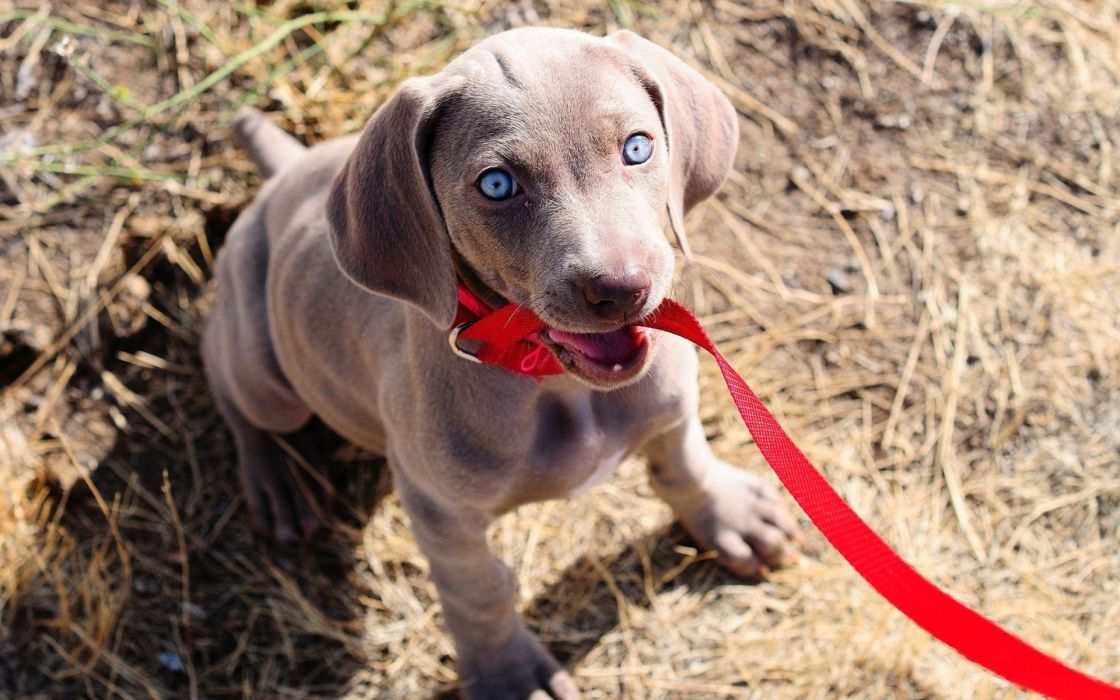 animals dogs puppy puppies eyes wallpaper