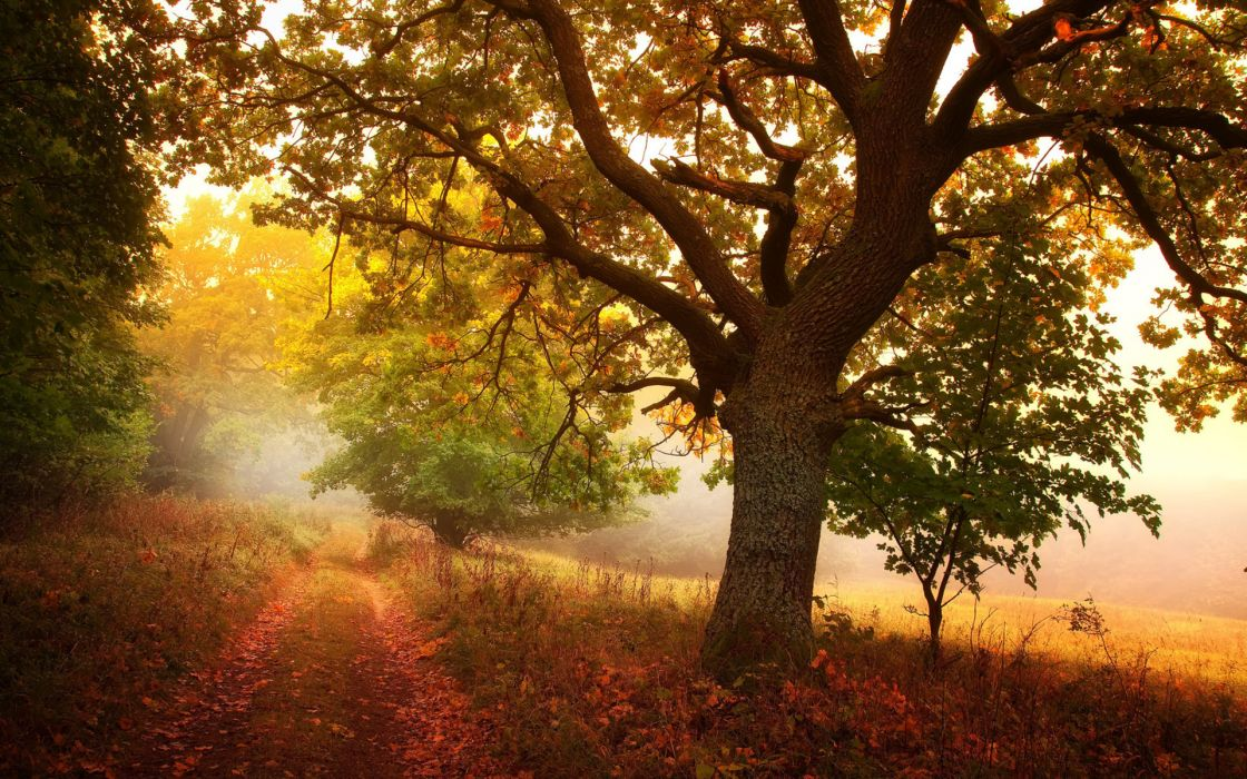nature landscapes trees roads autumn fall seasons fog mist haze colors fields wallpaper