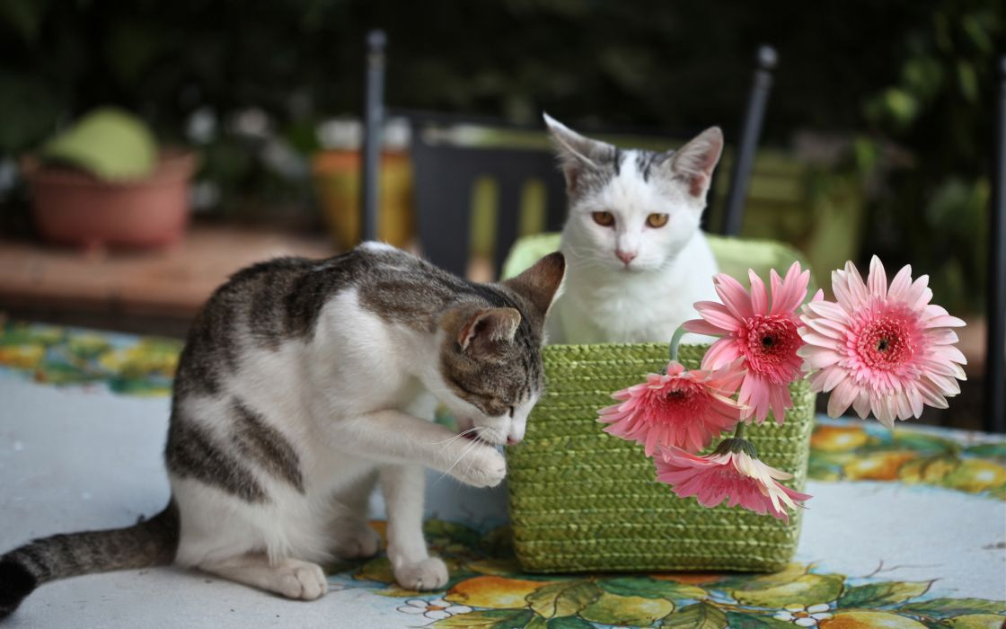 animals cats felines flowers paws wallpaper