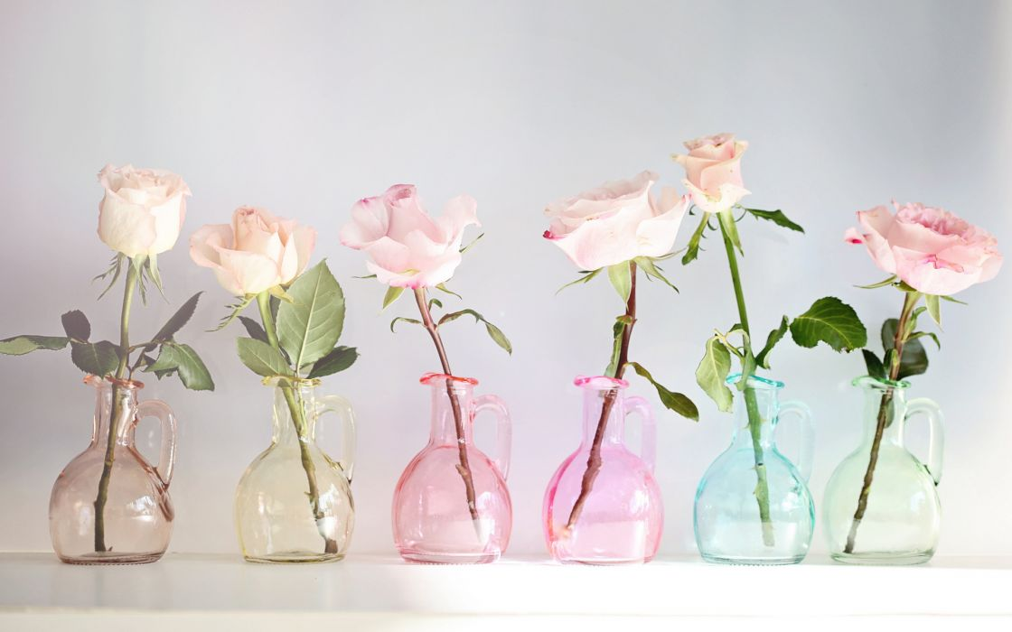 nature flowers vase glass colors still life petals wallpaper