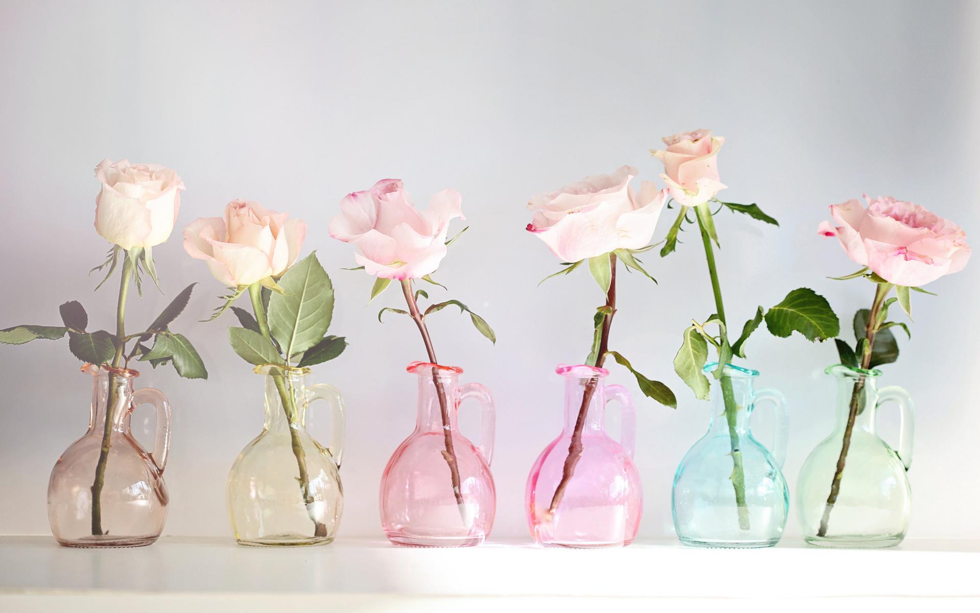 Nature Flowers Vase Glass Colors Still Life Petals Wallpaper
