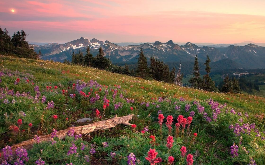 nature landscapes fields meadow flowers trees mountains sky skies clouds wood wallpaper
