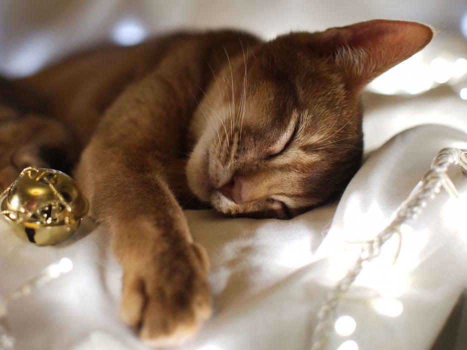 animals cats kittens felines wallpaper