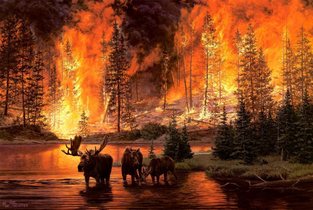fire in the sky_Jim-Tschetter Jim Tschetter animals moose nature paintings artistic art landscapes ...
