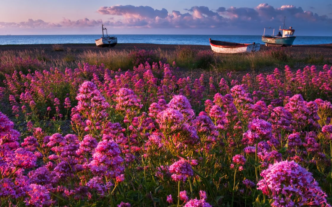 nature flowers pink purple plants fields landscapes boats vehicles ocean sea seascape sky skies clouds wallpaper