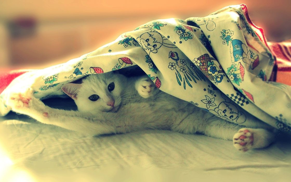 animals cats sleeping humor funny wallpaper