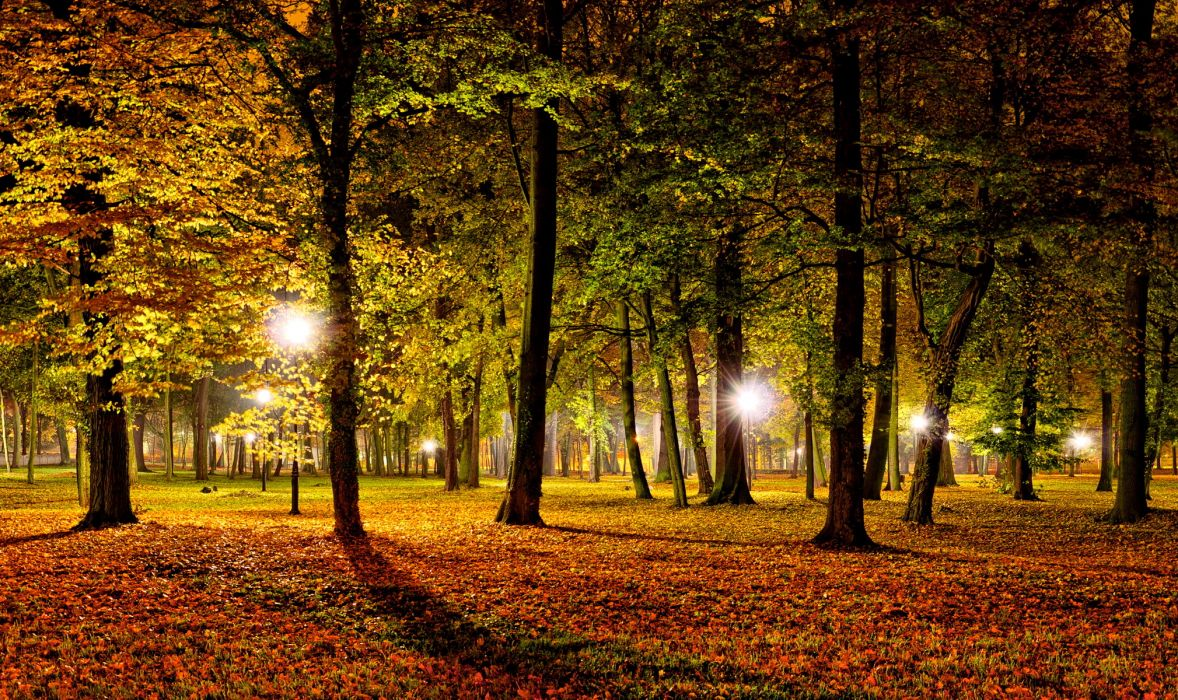 nature landscapes leaves park night lights dark trees autumn fall seasons wallpaper