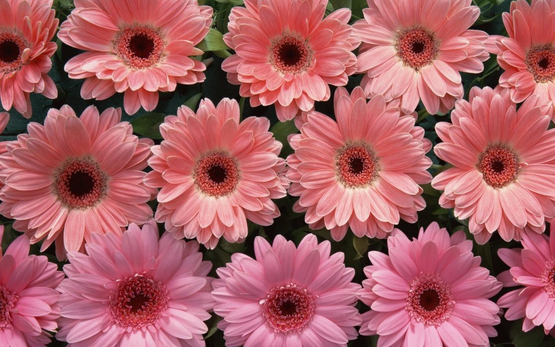 nature flowers pink petals abstract wallpaper