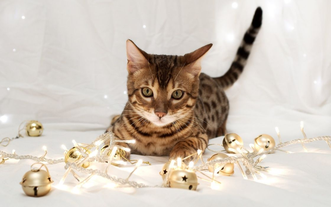 holidays new year festive lights bell animals cats humor funny play kittens wallpaper
