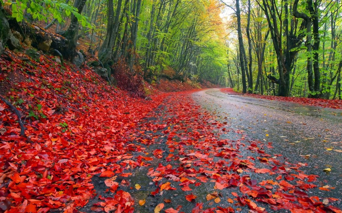 nature landscapes leaves trees forests roads colors autumn fall seasons wallpaper