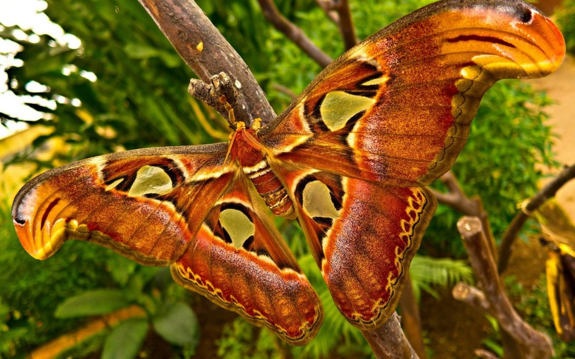 animals insects moth butterfly wings colors contrast trees tropical nature jungle forest wallpaper