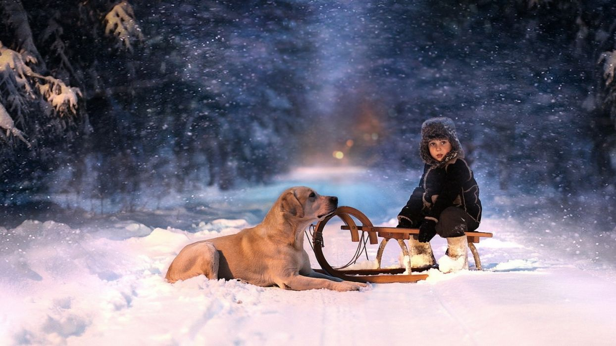holidays christmas winter snow seasons seasonal roads snowing snowflakes trees forest night lights animals dogs children mood fun sled vehicles friends love scenic photography wallpaper