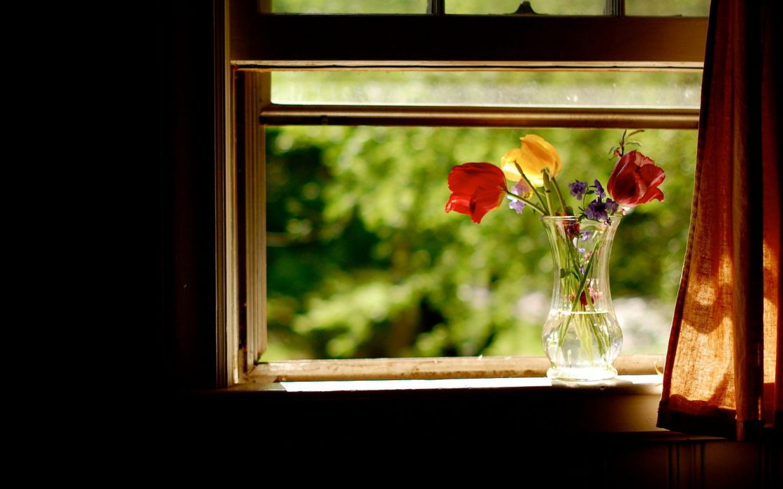 nature flowers still life vase glass petals colors window curtain room photography water sunlight wallpaper