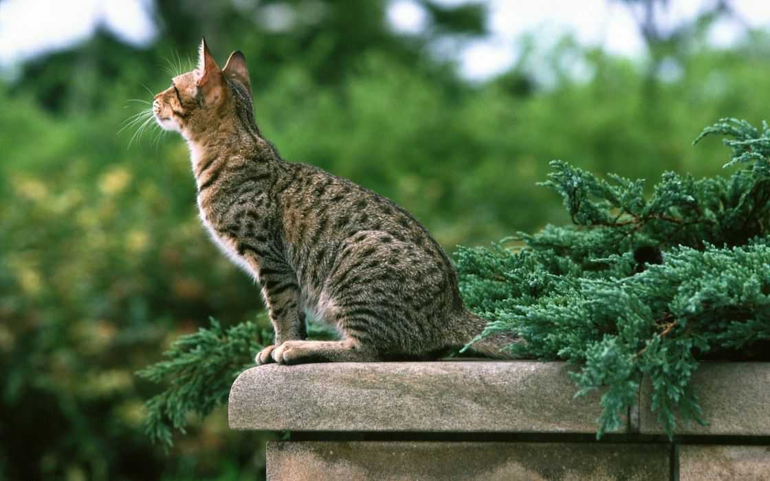 animals cats plants photography pose nature wall architecture balcony  wallpaper