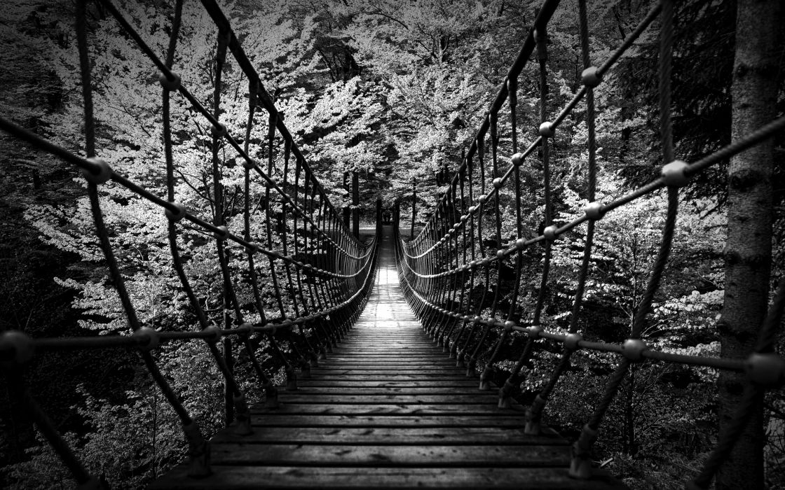 Monochrome black white b w landscapes nature wood rope scary bridges trees forest photography architecture